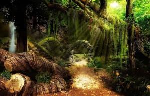 Дрематорий доктора Магнуса, лес, поваленные деревья, солнце