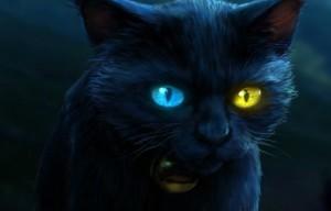 черная кошка с разными глазами