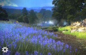 поле с люпинами природа